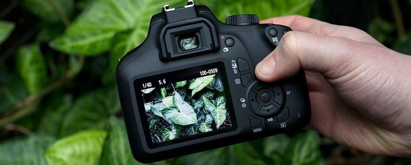 A camera being held above green leaves, showing the rear display.